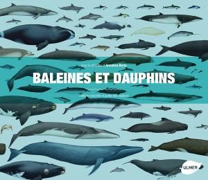 baleines-et-dauphins-_berta